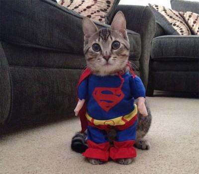 Macet janë gati për Halloween!