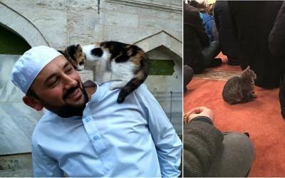 Një Xhami Për Macet? Imami Hap Dyert e Xhamisë Për T'u Dhënë Një Strehë Të Ngrohtë Maceve Endacake Të Stambollit Në Këto Ditë Të Ftohta Dimri!