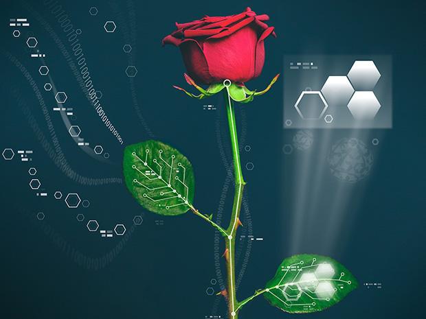 Trëndafili bëhet një bimë robotike