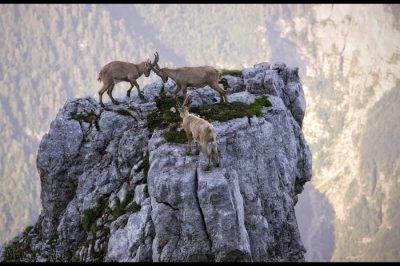 40 fotot e jashtëzakonshme të gjallesave në natyrë