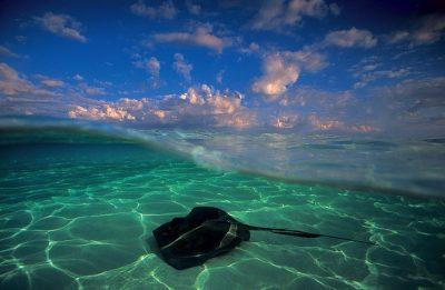 10 fotografitë më të bukura nënujore