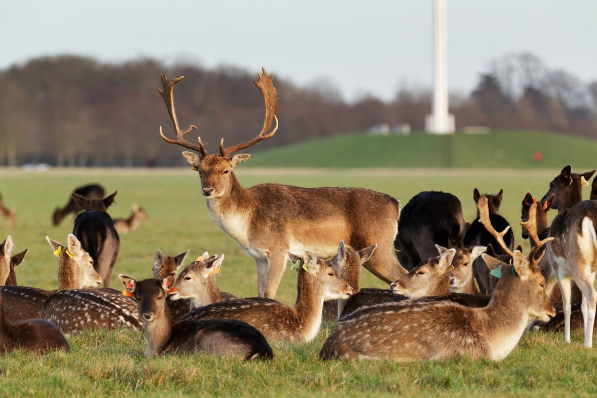 phoenix-park-dublin-while-the-irish-park-houses-one-of-europes-oldest-zoos-you-can-spot-packs-of-deer-wherever-you-walk