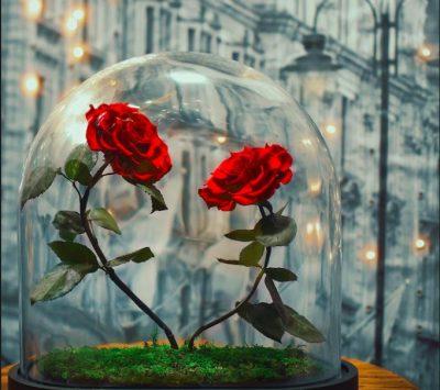 Lule, çokollata dhe letra ?! Këtë Shën Valentin uroni dhe festoni ndryshe.